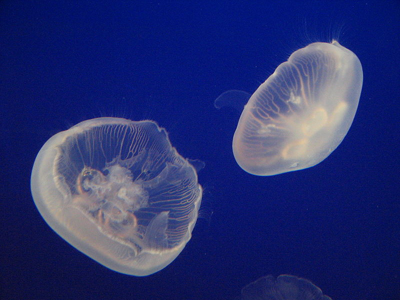 Do not be a jellyfish