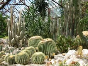 Botanical Gardens of Nikitsky
